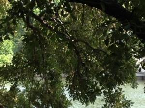 Hudson Bayou: Sarasota, Florida