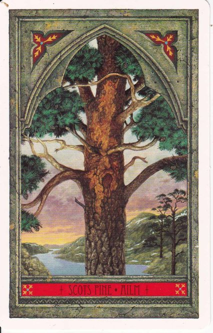 Green Man Tree Oracle: Scots Pine